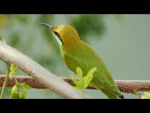 Green Bee Eater Killing Dragonfly - Best Budget Telephoto Lens Camera for Wild and Bird Photography