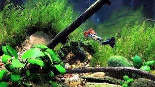 видео Внутренний фильтр для аквариума 40 литров