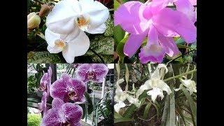 15 Jenis Bunga Anggrek Cantik Banget