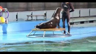 Дельфинарий СПБ(, 2016-02-01T13:30:21.000Z)