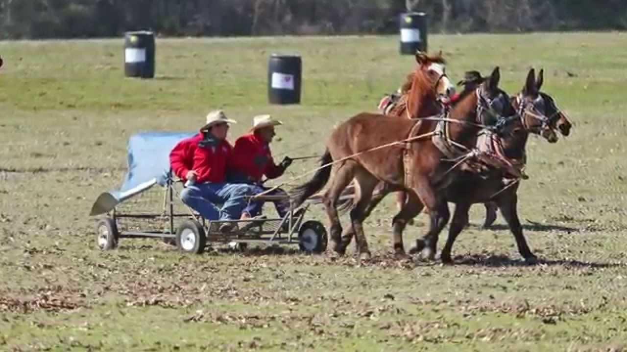 Chuckwagon Racing The Wagon