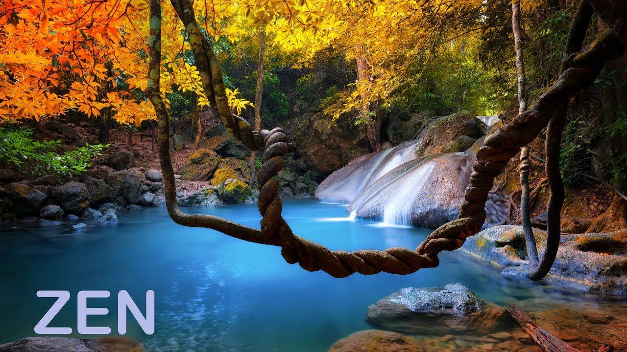 Música Zen Y Sonidos De La Naturaleza Quitar El Estrés Y Descansar La Mente Youtube