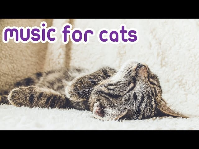 Cat Music! Music to Relax your Feline!