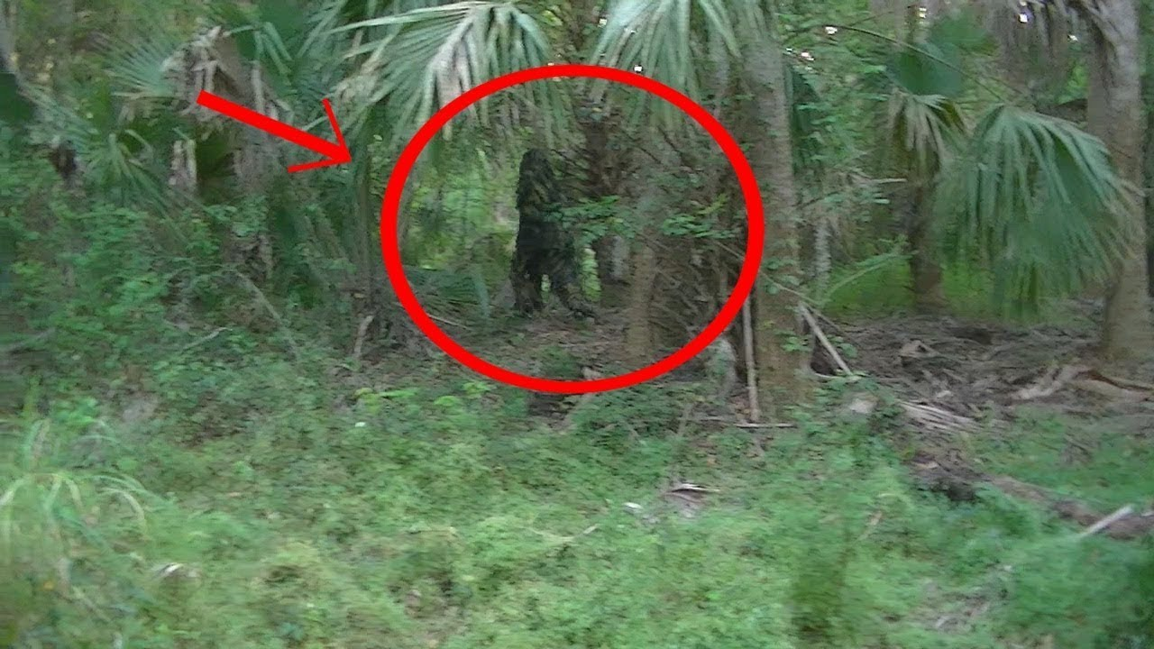 Is Bigfoot Real 2014 | www.pixshark.com - Images Galleries ...
