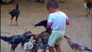 Download Lagu Akmal Main Ayam di Rumah Banjarbaru mp3