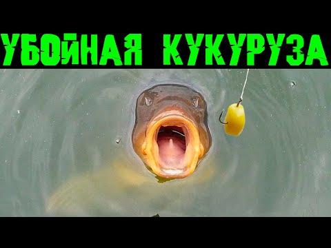 отличная прикормка рыбы