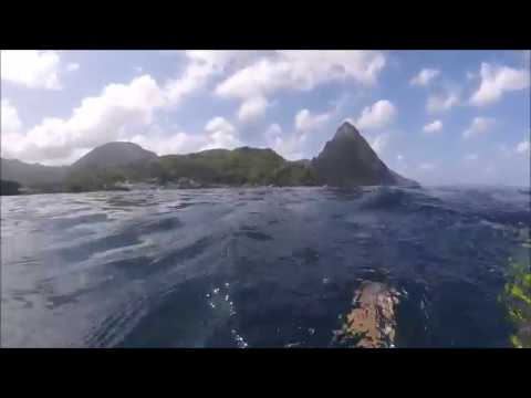Tropical Marine Ecology in St. Lucia