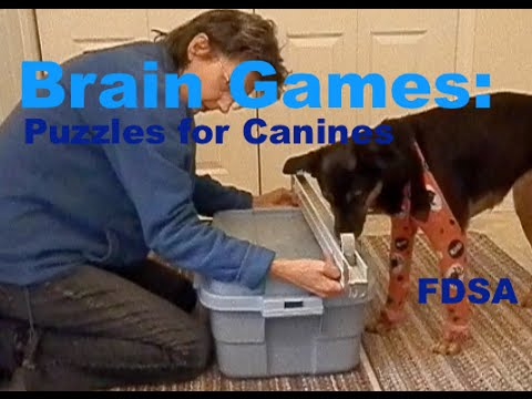 Brain Games: Puzzles for Dogs  Fenzi Online Classes
