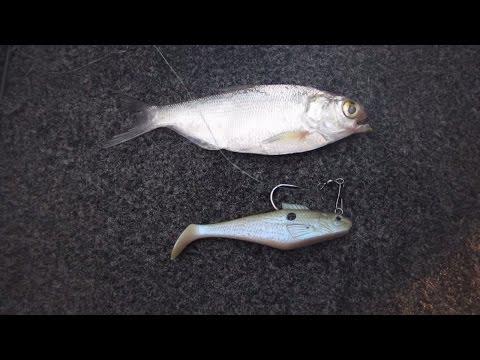 Yadkin river between salisbury nc and lexington north c for Bass fishing north carolina