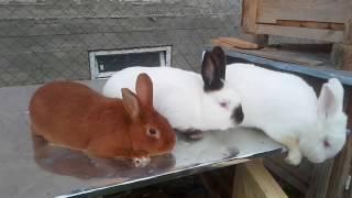 Удивительная кроличья ферма/Amazing rabbit farm