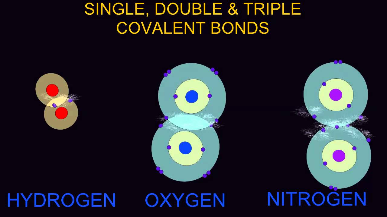 single double triple bond