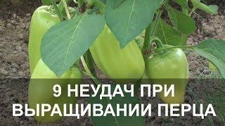 9 Основных Неудач при Выращивании Перца, как Спасти Урожай.