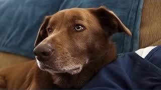 Life Insurance Dog Meme