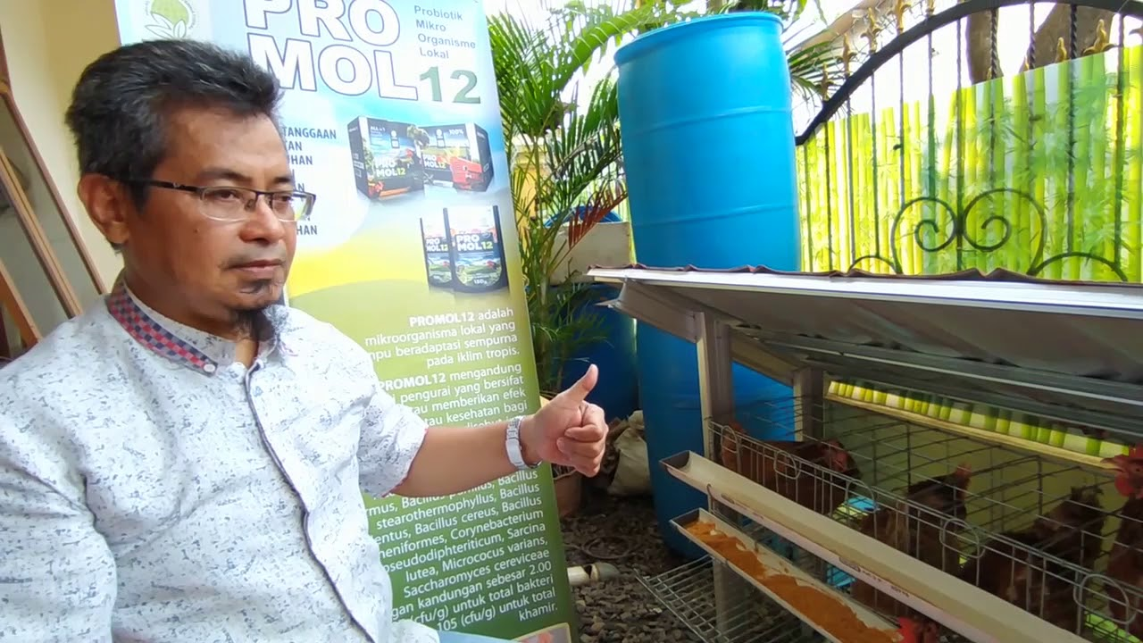Cara Beternak Ayam Petelur Bersama Promol12 by Deni ...