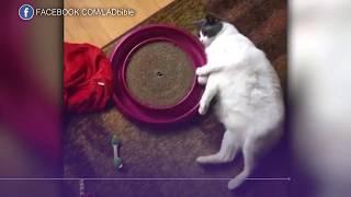 Видео с играющим в мячик котом покорило интернет