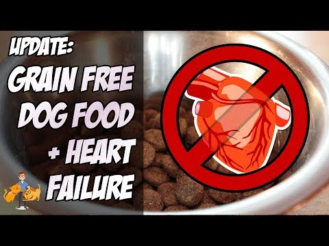 update:-grain-free-dog-food-and-heart-failure-(there's-more-risks...)---dog-health-vet-advice