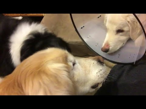 Funny Dogs vs Cat || Try not to laugh || Pet Planet ||
