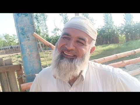 Baixar Pakistan Goat Farming - Download Pakistan Goat