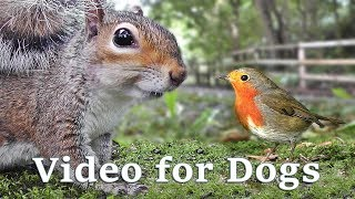 Videos for Dogs Extravaganza : Dog TV - 8 Hours of Birds and Squirrel Fun