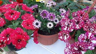 ПОСАДИТЕ ЭТИ ЦВЕТЫ В МАЕ и они ОДАРЯТ ВАС НЕЗЕМНОЙ КРАСОТОЙ цветы для открытого грунта и балкона
