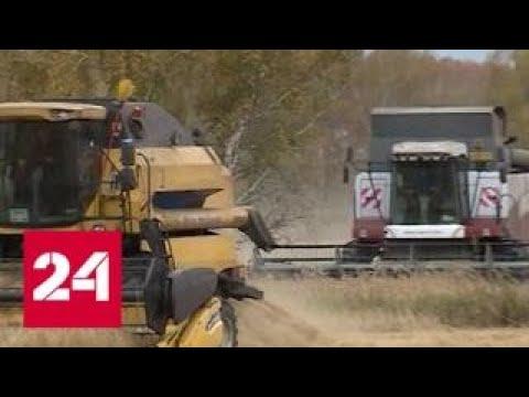 Путин: аграриям помогут госзакупки и субсидии на железнодорожные перевозки - Россия 24
