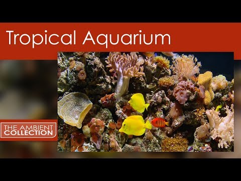 Tropical Aquarium DVD - Relax With 25 Minutes Of A Amazing Coral Aquarium With Tropical Fish