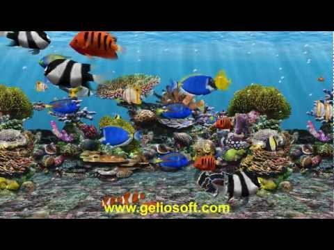 3D Fish School Aquarium Screensaver - Tropical Fish Tank For Windows HD