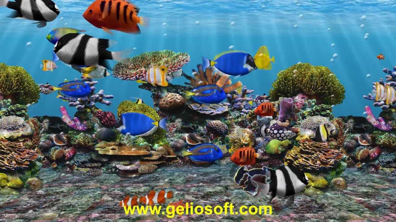 3d fish school aquarium screensaver - tropical fish tank for windows