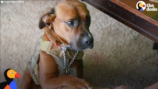 Homeless Dog Becomes Veteran's Service Dog And Best Friend | The Dodo