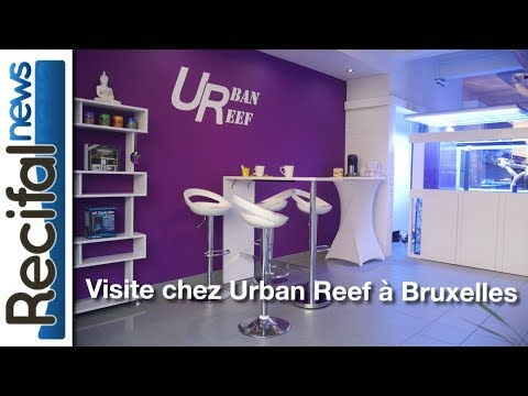 Visite chez Urban Reef à Bruxelles