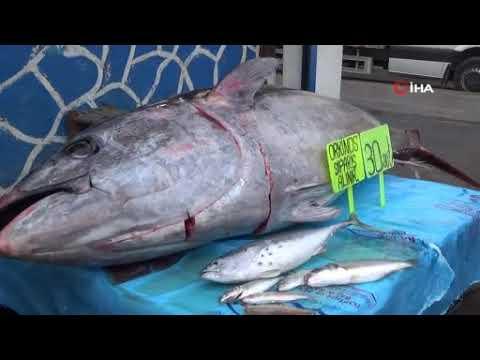 Diyarbakır'da 210 kiloluk orkinos balığını görenler cep telefonlarına sarıldı