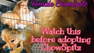 ChowSpitz is it worth adopting | for us it's  a big YES.. footage of our Queeny.