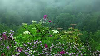 Download Rain Sounds with  Birds chirping Relaxing Music sleeping music,sleeping sounds,relaxing, study music
