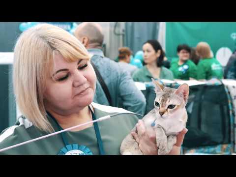 Всемирная выставка кошек 2020 в Иркутске