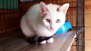 История спасения кошки Ариши | Любовь - это работа!
