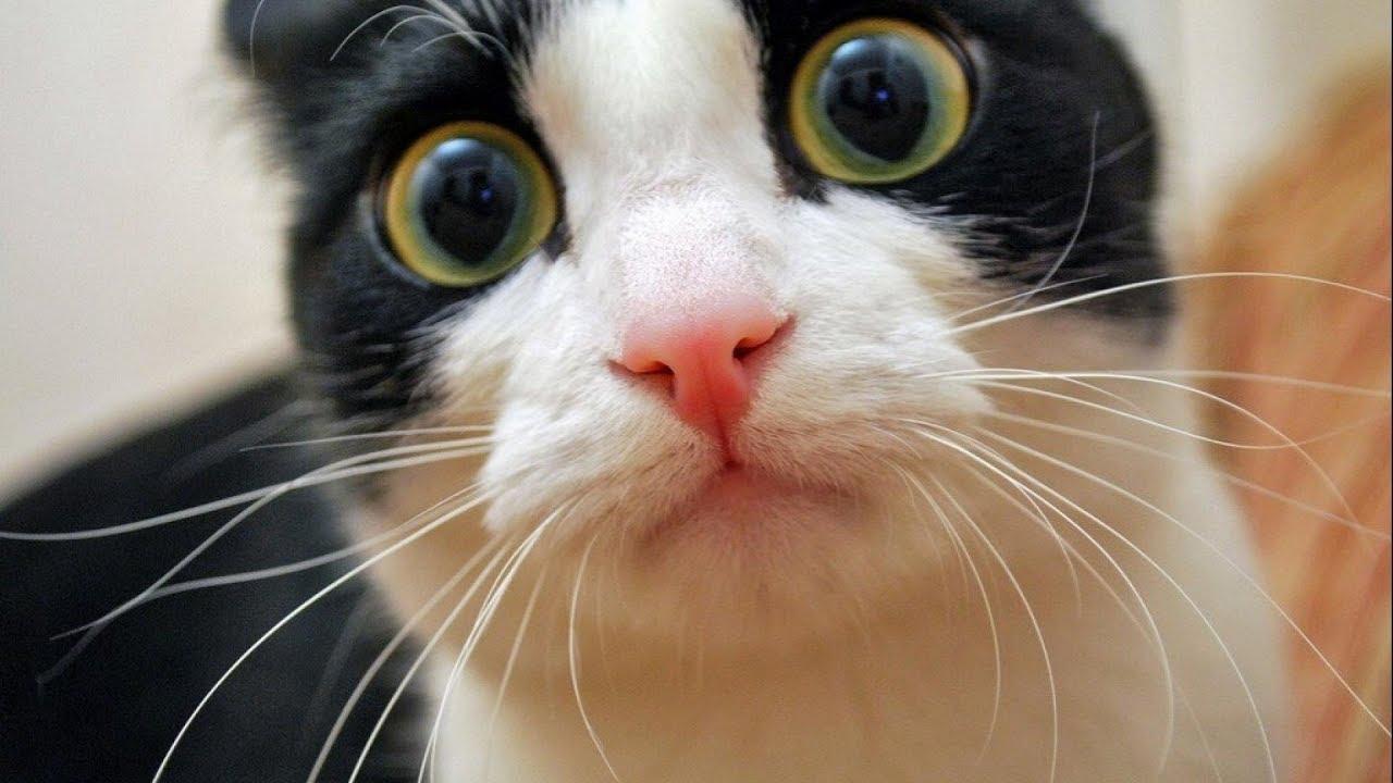 Смешное про животных Смотреть про смешных животных 2018 1 (ТОП 50 Без монтажа)