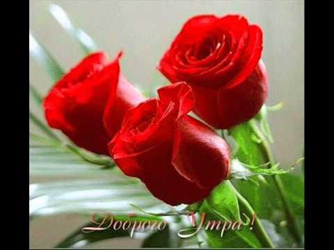 С добрым утром с розами