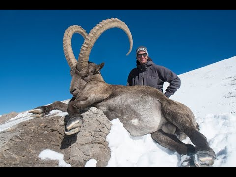 Hunting in Kazakhstan for Mid Asian Ibex