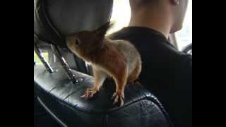 Масик в такси.