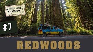 Magiczny Redwoods