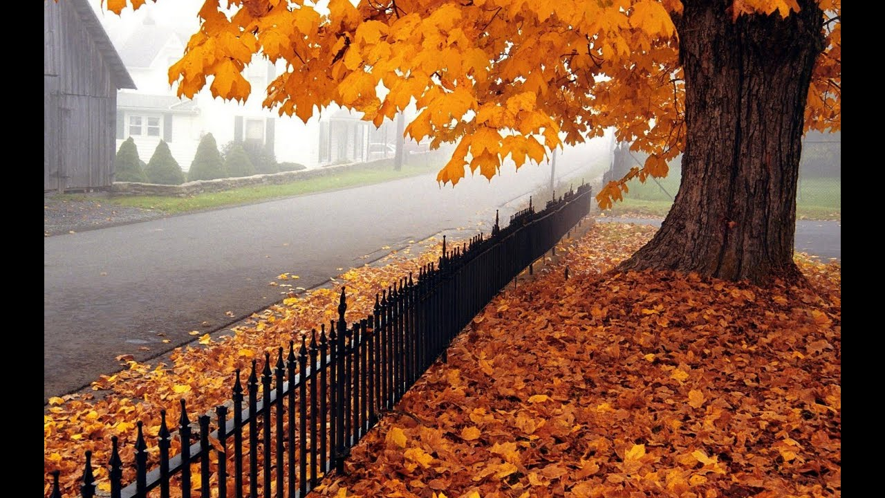 осень в пушкине фото
