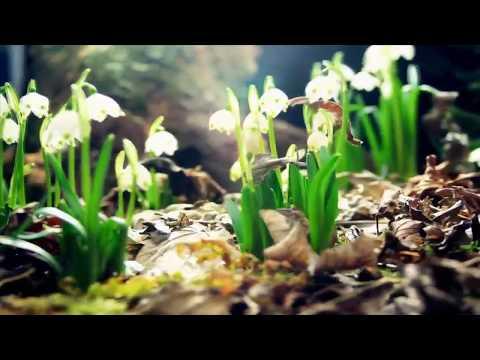 Поздравление с наступлением весны от Олега Гадецкого