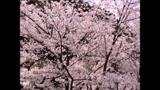 松崎ナオ - 太陽