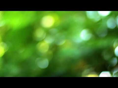Bokeh Background Video Free Dowload