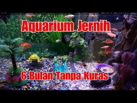 Filter samping aquarium