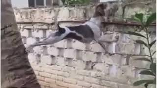 Любопытная собака