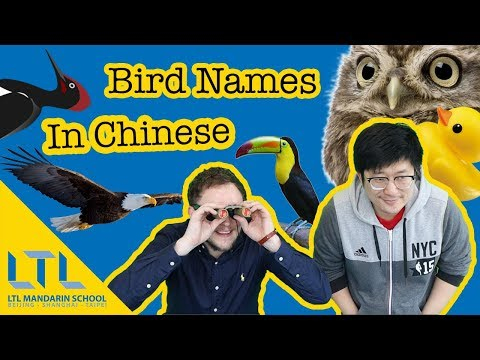 Definitive Guide to Animals in Chinese: The Ultimate 动物