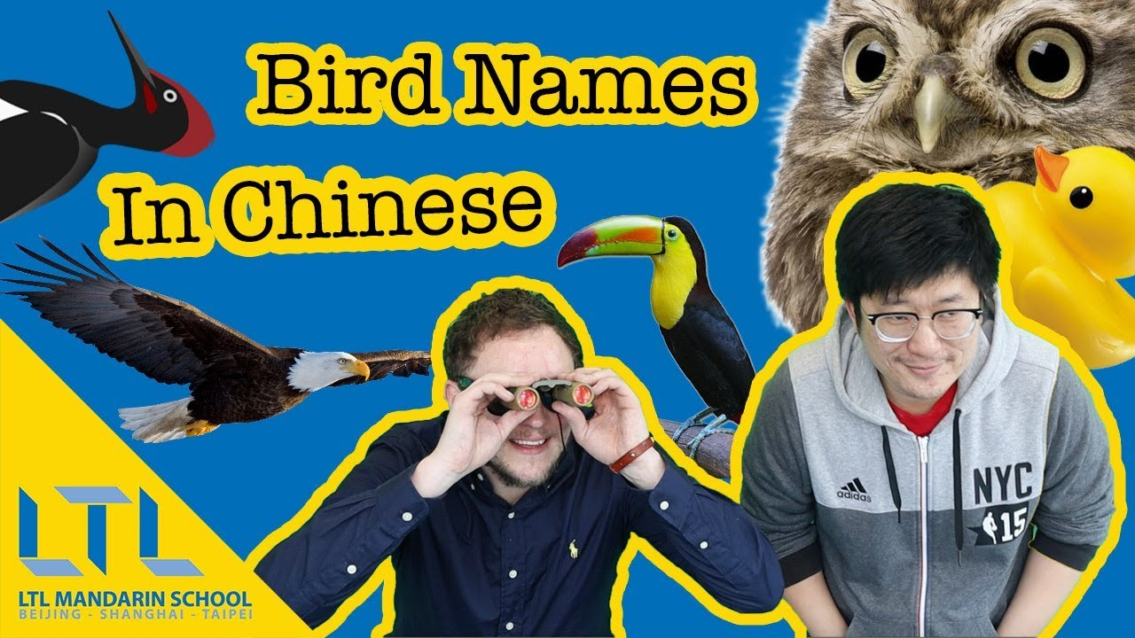 How To Name Birds In Chinese