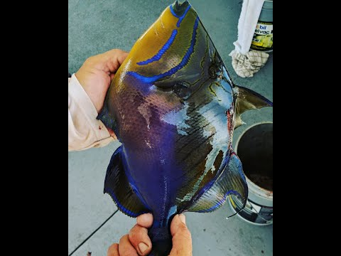 Catch And Cook Exotic Deep Sea Fish Jupiter, FL