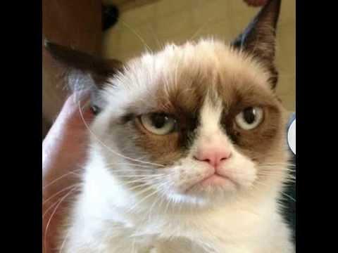 Сердитый кот/Grumpy cat